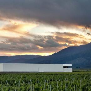 5 vinos argentinos que hay queprobar