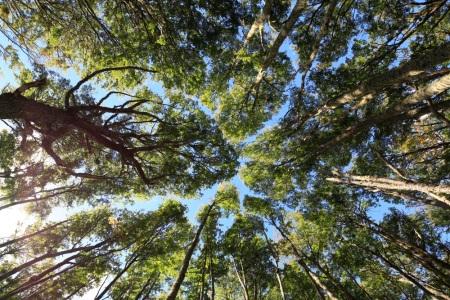 bosque_lenga_