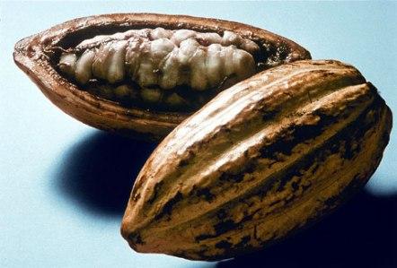 granos_cacao_