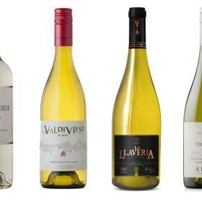 Los nuevos Sauvignon Blanc deCuricó