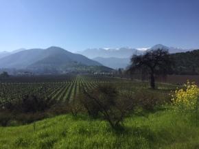 Un 2017 visitando viñedos ybodegas