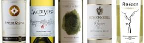5 Sauvignon Blanc de Curicó que hay queprobar