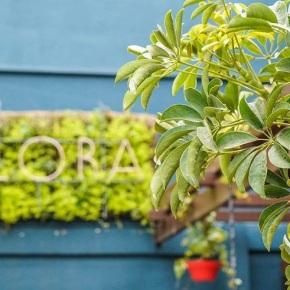 Flora: nuevos aires en Viña delMar